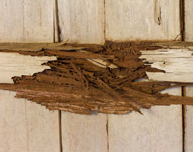 DRY ROT & WET ROT CONTROL
